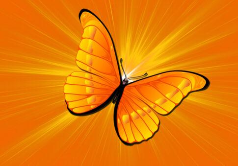 05_бабочка